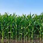 Why corn is the latest commodity to boom