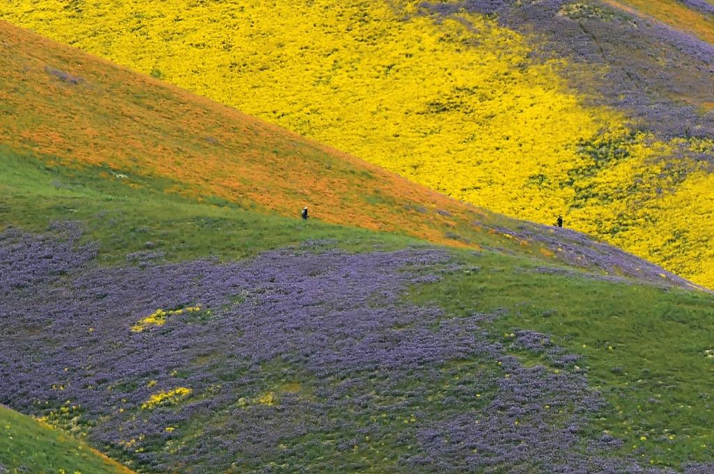Carrizo Plain was declared a national monument in 2001 under the Antiquities Act, a decision now under review by the Trump administration (AFP Photo/Robyn Beck)