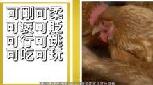 【娛樂睇呢啲】廣東話教曉我的事 之「雞」