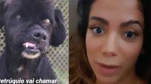 Anitta adota cãozinho com Luisa Mell e já procura outro