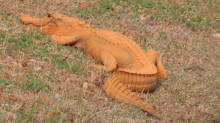 Orange alligator spotted in South Carolina gets Trump-inspired nickname