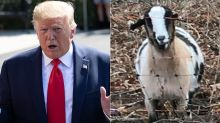 How Trump's Goats Likely Save Him $88,000 A Year