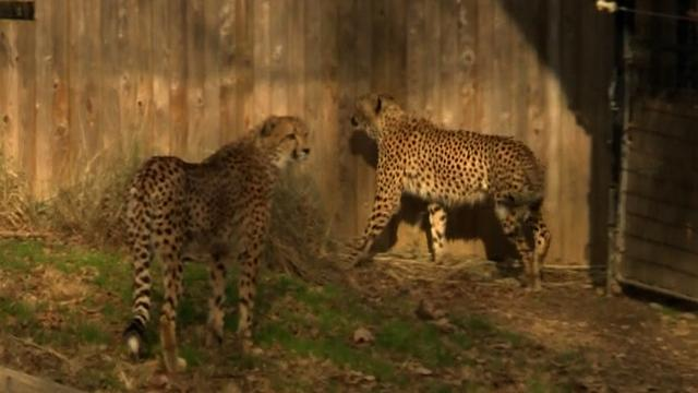 National Zoo officials release internal report addressing animal concerns