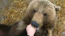 Meet Mansur, man's bear friend