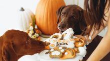 New Festive Pumpkin Spice Dog Cookie Treats Let Canines Enjoy the PSL Craze Safely