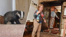 Pensioner forced to fight off badger who broke into house