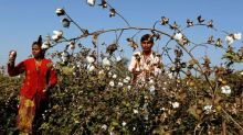 Haryana to Procure Cotton from CCI Starting October 1 at MSP