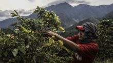Read this before you panic about a global coffee shortage