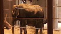New Elephant Center at National Zoo