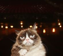 Grumpy Cat, Whose Frown Made the Internet Smile, Dies After Infection