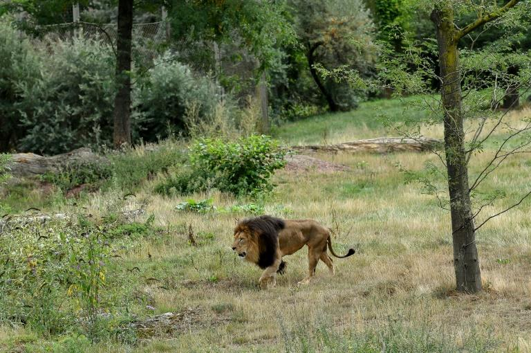Lions Eat Teen in Safari Park