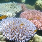 Researchers find 'catastrophic' coral die-off on Great Barrier Reef