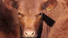 Australian Agricultural Company Ltd reports: What you need to know