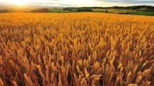 Grains Consolidate but Poised to Test Higher Levels