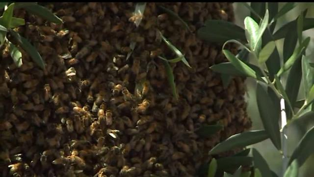 Local Beekeepers Ask The County To Ease Up On Restrictions