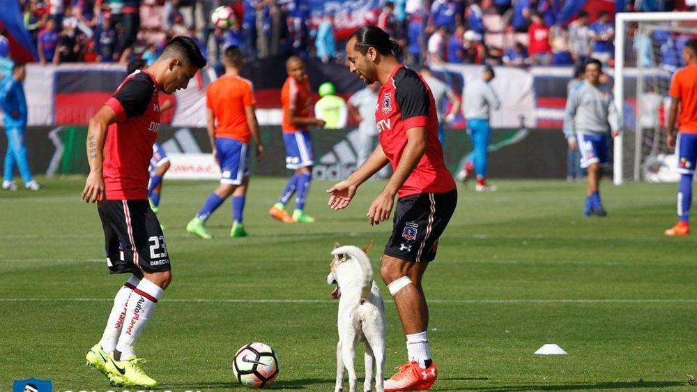 Baeza y Figueroa vuelven al equipo titular de Colo Colo