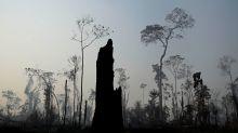 Leo DiCaprio's Environmental Organization Creates $5 Million Fund For Amazon Fires