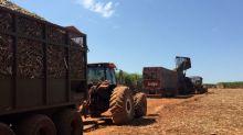Vendas de etanol hidratado por usinas do CS sobem 25,3% em dezembro, diz Unica