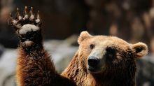 Wall Street Sees Goldilocks, So Beware Bears
