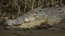 Man wrenches crocodile off head with bare hands in Queensland attack