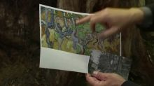 Tree roots tell story of Van Gogh's final hours