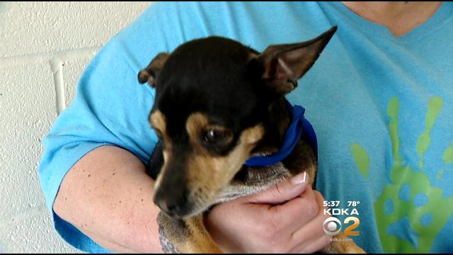 Motorists Rescue Small Dog On The Loose In Fort Pitt Tunnel