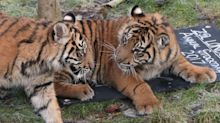 Brexit could endanger rare species, say British zoos