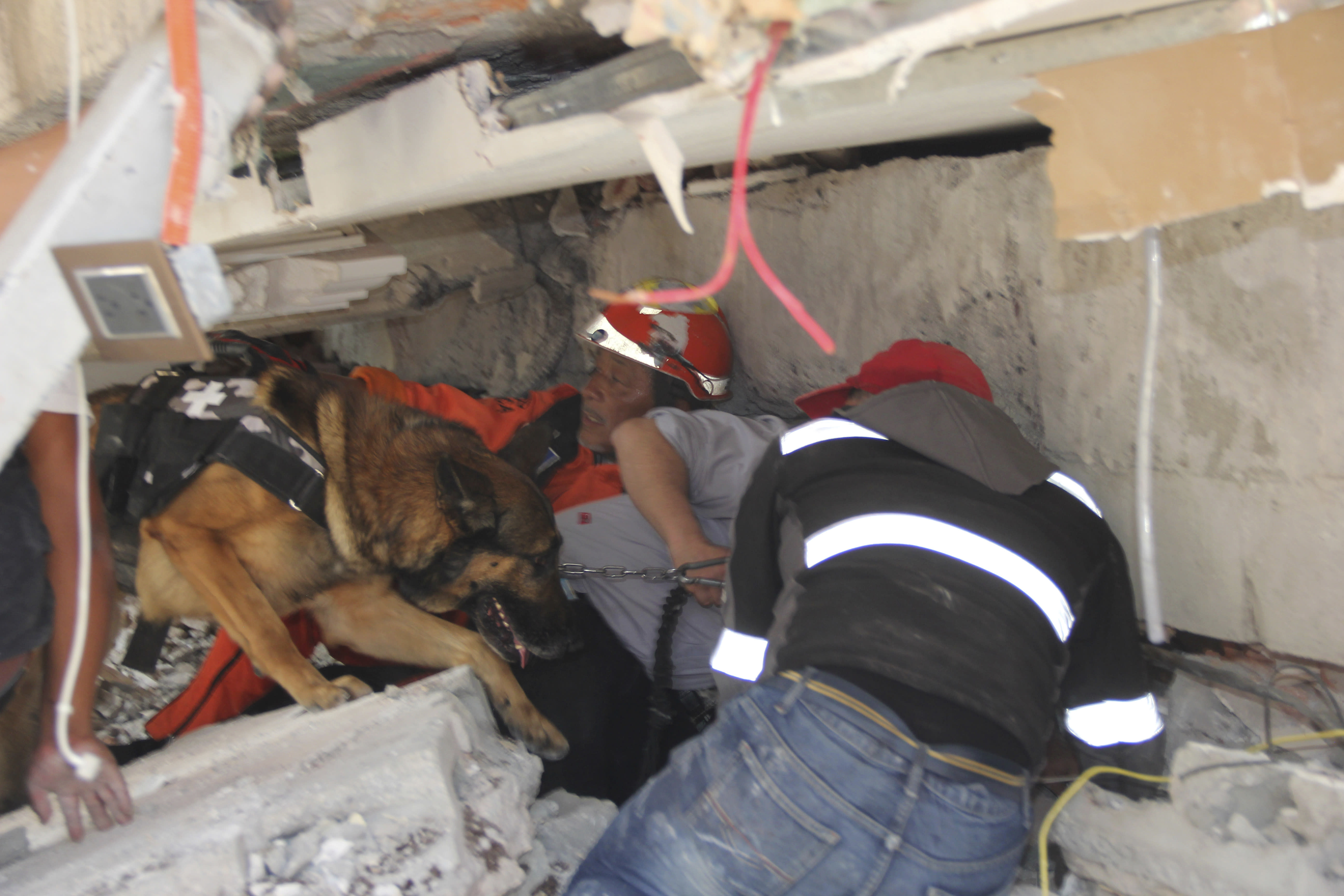 <p>Rescue workers and a trained dog search for children trapped inside the collapsed Enrique Rebsamen school in the Coapa area of Tlalpan, Mexico City, on Sept. 19, 2017. (Photo: Carlos Cisneros/AP) </p>