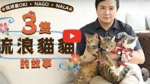琉球皇OKI x Nago x Nala 三隻流浪貓貓的故事