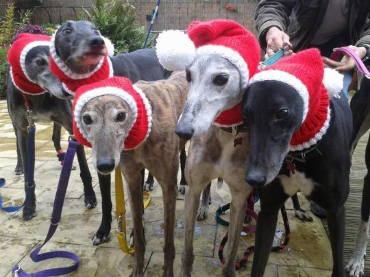 "<p>Jan Brown of Seaburn, England knits sweaters, hats, and neck warmers for greyhounds in the local shelters. ""Unlike furrier animals, like German shepherds, having layers is really essential for our greyhounds, and it's all the sweeter when it's in a Christmas design,"" she says. <a href=""https://www.yahoo.com/makers/woman-quit-her-job-knit-230415748.html"" data-ylk=""slk:Read Yahoo Makers' entire story here.;outcm:mb_qualified_link;_E:mb_qualified_link;ct:story;"" class=""link rapid-noclick-resp yahoo-link"">Read Yahoo Makers' entire story here.</a> <i>(Photo: <a href=""https://www.facebook.com/KnittedDogClothes/photos/pb.130906927052350.-2207520000.1449516707./306365906173117/?type=3&theater"" rel=""nofollow noopener"" target=""_blank"" data-ylk=""slk:Knittedwithlove.co.uk via Facebook"" class=""link rapid-noclick-resp"">Knittedwithlove.co.uk via Facebook</a>)</i></p>"