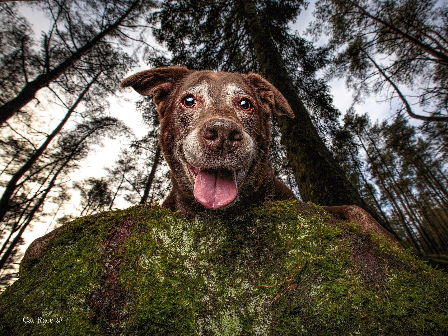 <p>Grey-faced Bailee is a Labrador Retriever and was captured outside on an adventure. </p>