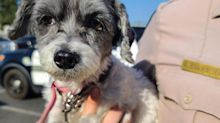 Dog Owner Arrested After Puppy Rescued from 131-Degree Car in California