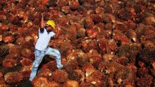 Malaysian prisoners may face 'forced labour' on palm oil plantations