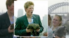Just a little reminder of the time Prince Harry had his gap yah in Australia