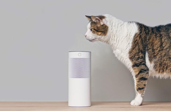 cat and speaker