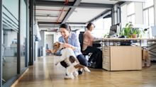 Should we really bring our pets to work?
