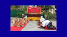 From Humans to Doggos; Social Media Celebrates Yoga Day