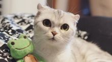Instagram Is Obsessed With This Adorable Big-Eyed Cat