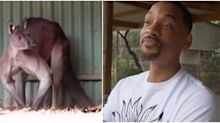 Will Smith squares up to a massive kangaroo