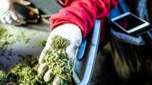 Molson Coors Has Found Its Marijuana Partner