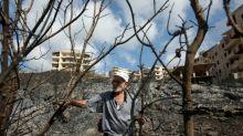 En Syrie, des récoltes d'oliviers prometteuses anéanties par les incendies