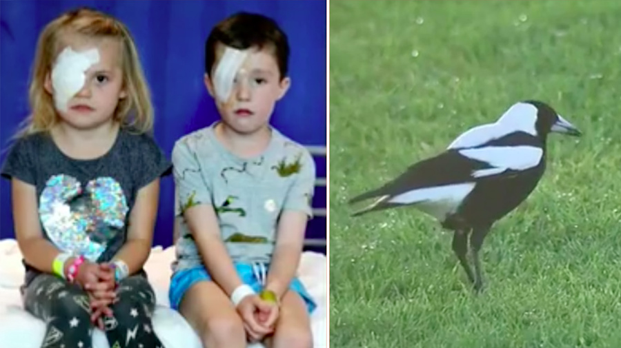Two children could lose sight in one eye after magpie attack