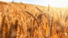 Soybeans and Grains Trade Higher Due to Hot Weather and Profit-Taking