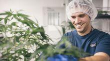 Canopy Growth Looks Toward a Marijuana Revenue Explosion