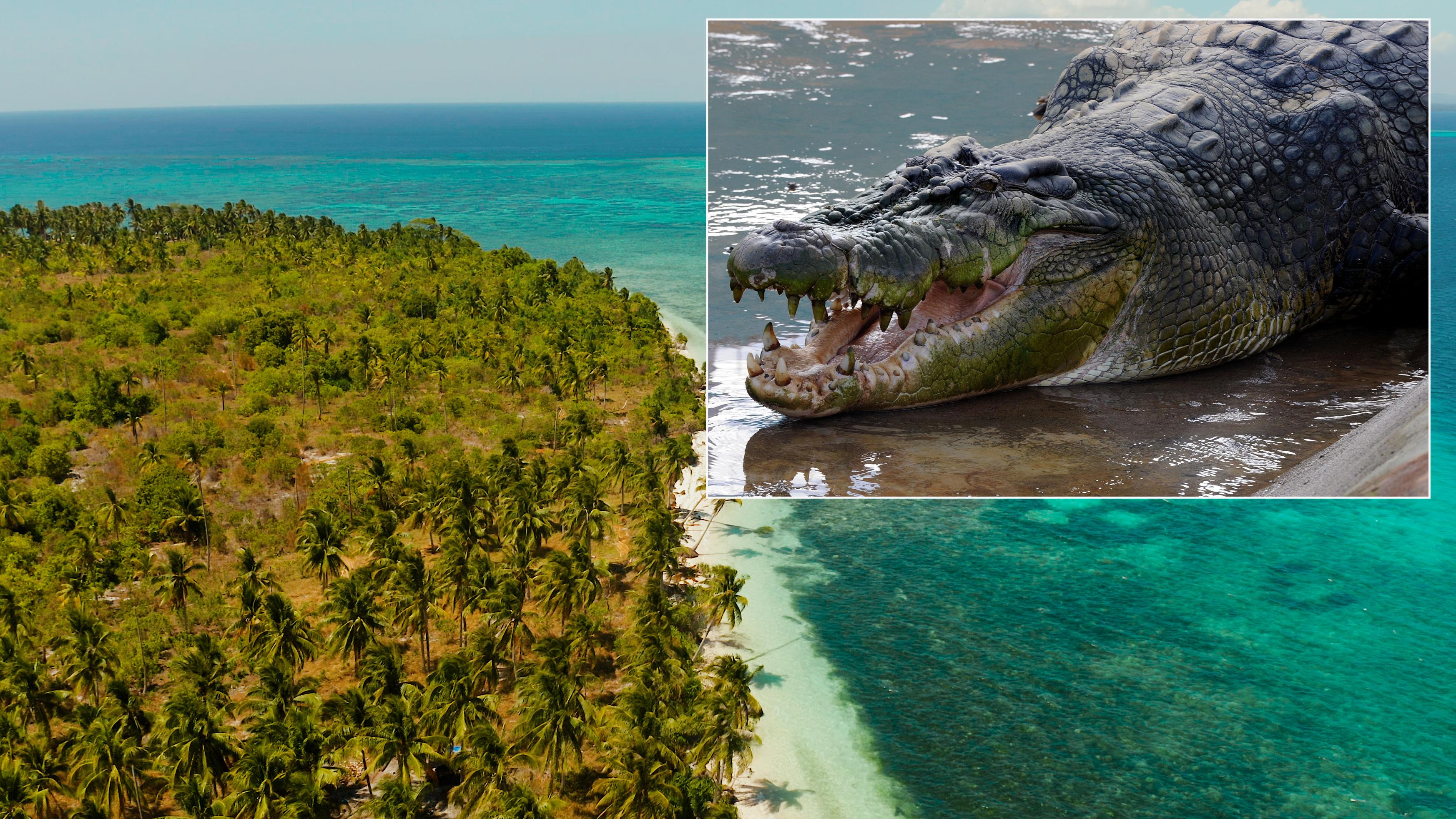 Boy, 10, snatched from boat and eaten by saltwater crocodile