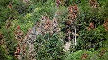 Réchauffement climatique: «On n'est pas sûrs que les arbres puissent s'adapter»