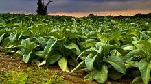 Rating BUY per un leader mondiale nel settore del tabacco