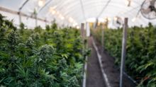 Will Cannabis Producers Ditch Greenhouses for Bioreactors?