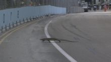 Max Verstappen comes face-to-face with lizard during F1 practice