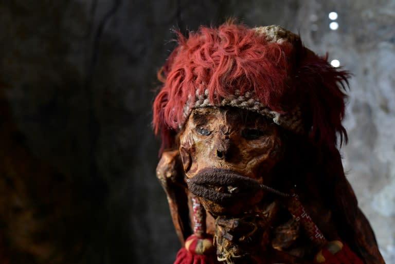 An Inca mummy at the Pairi Daiza animal park in Brugelette, Belgium (AFP Photo/JOHN THYS)